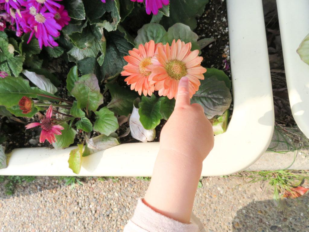 花はどこで買う?